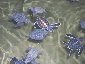 07_turtle_babies_2