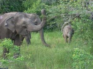 08_elephants-2